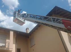 gatto bloccato sul tetto a busto garolfo