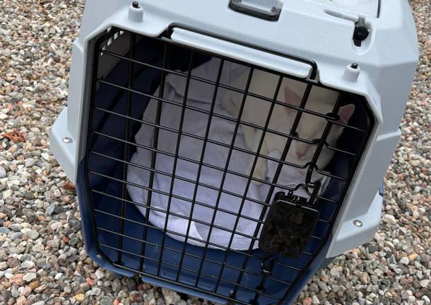 gatto salvato dai vigili del fuoco a Parabiago