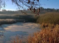oasi fontanili Gallarate