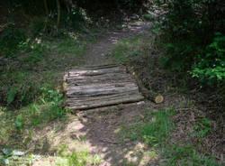 ponte sentiero bosco albizzate
