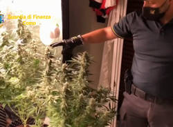Serra di marijuana in camera da letto