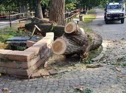 Albero caduto al parco Castello di Legnano