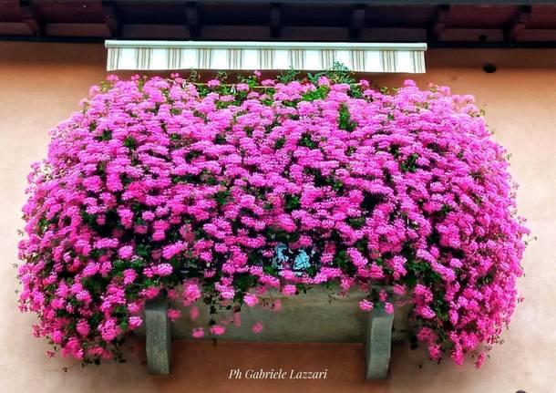 Balcone fiorito - Gabriele lazzari
