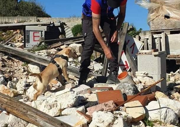 cane da soccorso in macerie