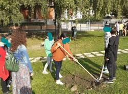 Gli studenti di Cuveglio piantano alberi in paese