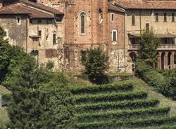 Castiglione Olona  - Vendemmia 2021 nella vigna  della Collegiata