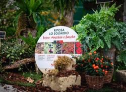 Da Nicora è Garden Festival d'Autunno