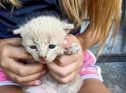gatti recuperati Cassano Valcuvia