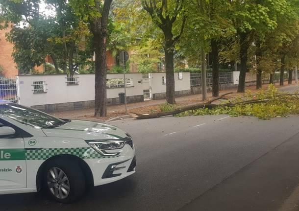 ramo caduto busto arsizio polizia locale