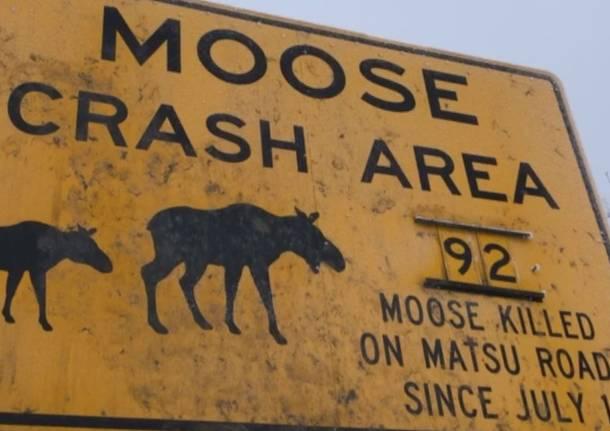 Animali selvatici e sicurezza stradale