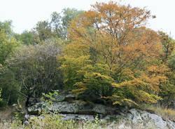 Penellate d\'autunno