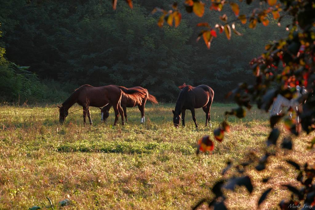 cavalli alla quassa di ispra mirko forza