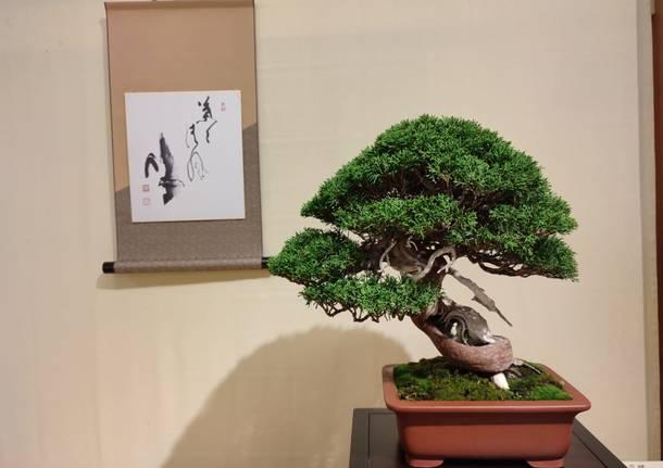 Esposizione di Bonsai e Suiseki