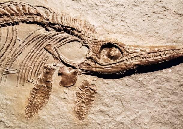 fossili generiche