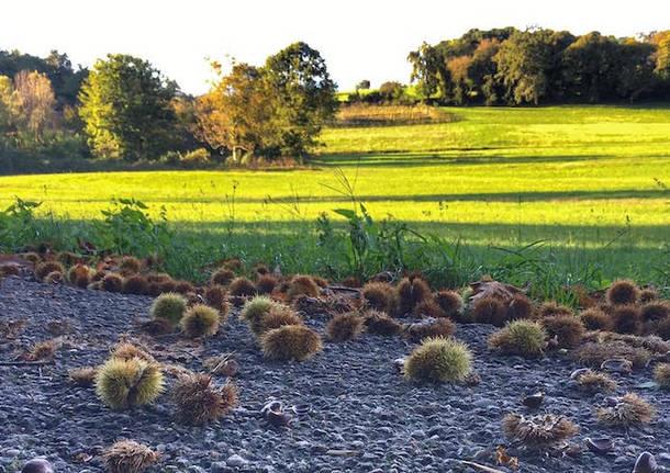 foto del giorno 12 ottobre 2021 piana di vegonno autunno