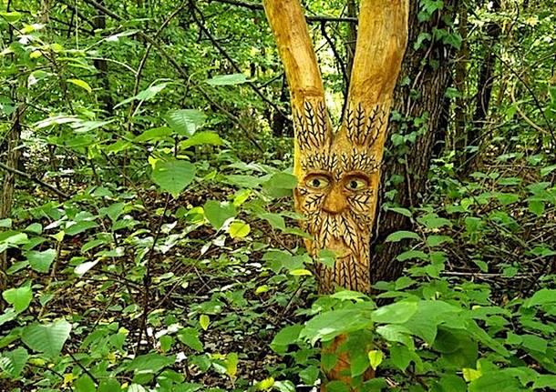 Il nuovo sentiero della magia nel bosco al Parco Pineta