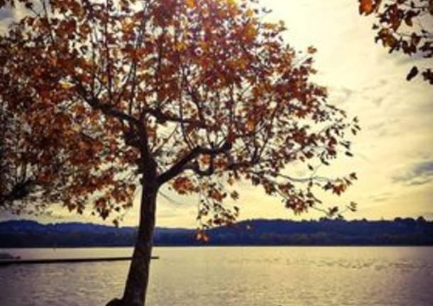 L'autunno alla Schiranna