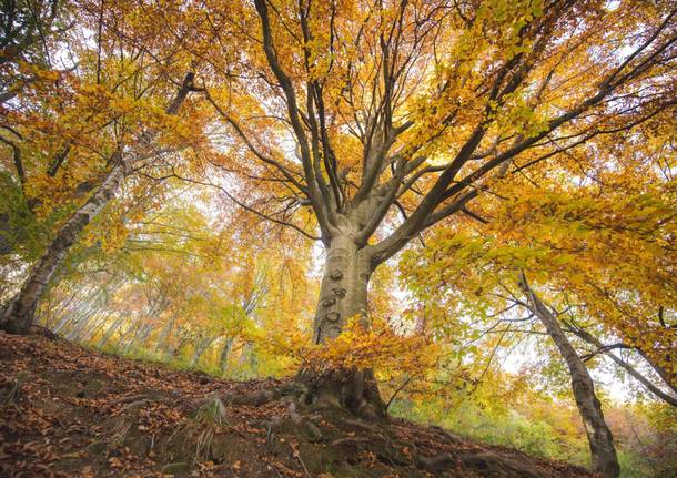 Lo spettacolo del foliage all'Oasi Zegna