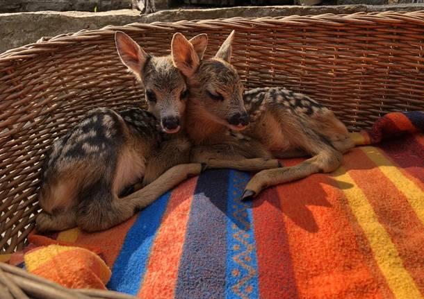 Il Rifugio Animali Felici di Brissago ha bisogno di pane secco per i 500 ospiti