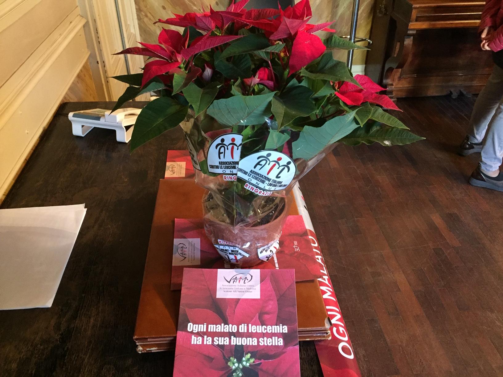 Prezzo Stella Di Natale Ail.In Vendita Le Stelle Di Natale Di Ail Per Sostenere L Ematologia