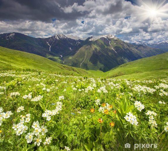 Fields of blossom flowers in the Caucasus mountains